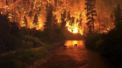 森林火灾监控防护预警系统怎么建